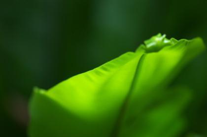 Green f007 12th